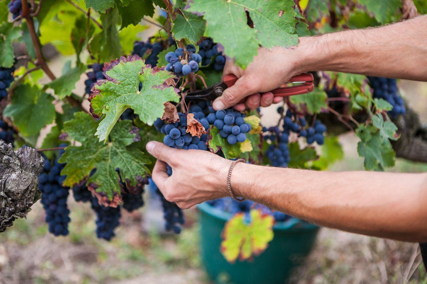 Formation en viticulture au lycée Edgard Pisani